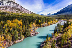 Indian summer in autumn. Dense forests cover the lake shores. Indian summer in Canada, warm sunny day in autumn. Abraham Lake is the most beautiful lake in the Royalty Free Stock Photo