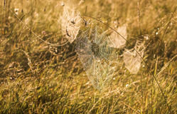 Indian Summer and Cobwebs. Web with water drops on the grass in the early autumn morning Stock Photography