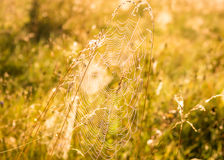 Indian Summer and Cobwebs. Web with water drops on the grass in the early autumn morning Royalty Free Stock Photography