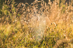 Indian Summer and Cobwebs. Web with water drops on the grass in the early autumn morning Stock Photo