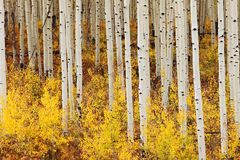 Indian summer in colorado Stock Image