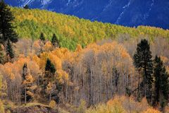 Indian summer in colorado Royalty Free Stock Image