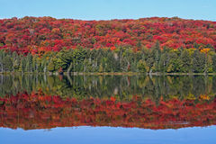 Indian summer. Colors of indian summer - Algonquin Provincial Park, Canada Royalty Free Stock Image