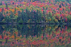 Indian summer. Colors of indian summer - Algonquin Provincial Park, Canada Stock Image