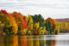 Free Indian Summer Foliage By A Lake In Quebec, Canada Stock Photos - 170341863