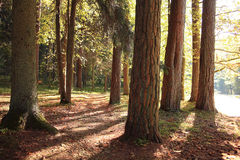 Indian summer  forest Stock Image