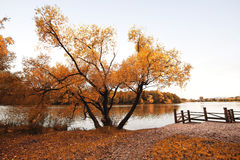 Indian Summer Royalty Free Stock Photos