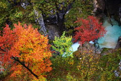 Autumnal coloring of trees in gorge Royalty Free Stock Images