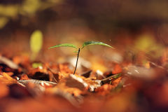 Indian summer with green sprout Royalty Free Stock Photos
