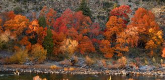Indian Summer In Patagonia Royalty Free Stock Photos