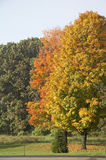 Indian summer is06 stock photography