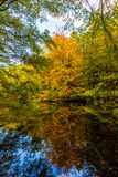 Indian Summer Lake. Indian Summer at the Pfalz royalty free stock photos