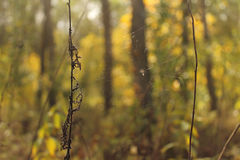 Indian summer. Little spider is cooking the dinner Royalty Free Stock Photography