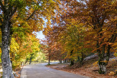 Indian Summer Stock Photography