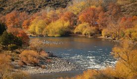 Indian summer in Ptagonia. Autumn colors alongside Alumine river in Patagonia, Argentina Stock Photo