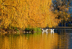 Indian summer in the Pyrenees catalan, Spain Stock Photography