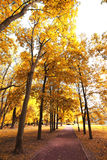 Indian Summer Royalty Free Stock Image