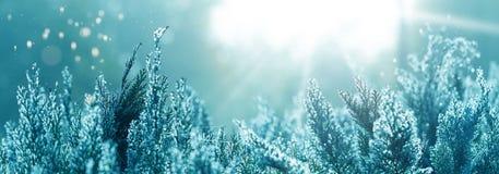 Indian summer, sun shines on Thuja hedge royalty free stock photo