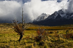 Indian summer. Torres del Paine. Chile Stock Photography