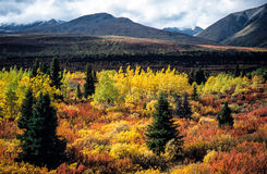 Indian summer, Yukon, Canada Royalty Free Stock Image