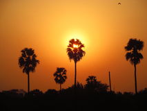 Indian sunset. Palms sunset in Allahabad, India royalty free stock photo