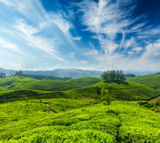 Tea plantations. Indian tea concept background - tea plantations. Munnar, Kerala, India stock photos