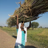Indian teen carrying reeds. Stock Photography