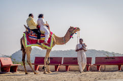 Indian tourists riding camels at Kalo Dungar, Kutch, India. Stock Images