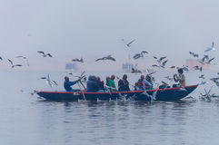Indian tourists are surrounded by seagulls on boat on the river Ganges foggy morning. Varanasi Royalty Free Stock Images