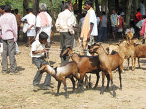 Indian tribal weeklly goats market Royalty Free Stock Photography