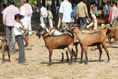 Indian tribal weeklly goats market Royalty Free Stock Image