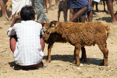 Indian tribal weeklly goats market Stock Photos