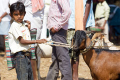 Indian tribal weeklly goats market Royalty Free Stock Photo