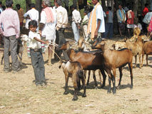 Indian tribal weeklly goats market Stock Photography