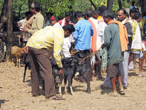 Indian tribal weekly goats market Royalty Free Stock Photo
