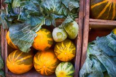 Indian vegetable market (greengrocer's). Are generated from European varieties of vegetables. Cabbages, marrows, pumpkins, onions, watermelons and other stock image