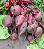 Indian vegetable-Red beet. Green fresh vegetables, beet on market Royalty Free Stock Photo