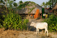 Indian village stock photos