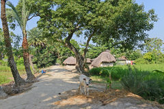 Indian Village. Beautiful view of a village in WestBengal-India Stock Photos