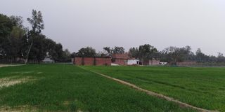 Indian village with field. Village and wheat field stock image