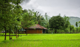 Indian Village during monsoon. Indian village with paddy fields in the foreground Stock Photos