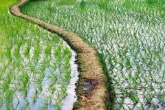 Indian Village Rice Field Stock Photo