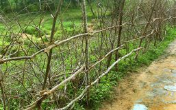 Indian village wood branches fence. This fence made with wooden branches and coconut fiber rope Royalty Free Stock Photo