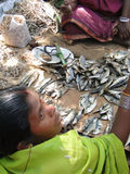 Indian villager sells dried fish Stock Photography