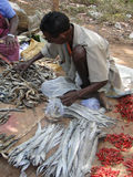 Indian villager sells dried fish Stock Images