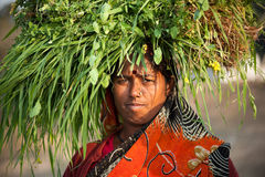 Indian villager woman carrying green grass. Indian happy villager woman  carrying green grass  home for their livestock Royalty Free Stock Photography