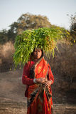 Indian villager woman carrying green grass. Indian happy villager woman  carrying green grass  home for their livestock Stock Photography