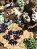 Indian villagers sell eggplant Stock Photography