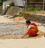 Indian woman apportion  fish. Palolem beach. Royalty Free Stock Photo