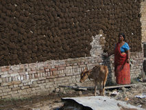 Indian woman puts cow dung cake patties on wall Royalty Free Stock Images